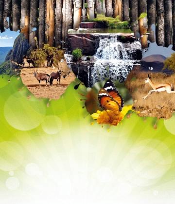 Consciencialização Ambiental